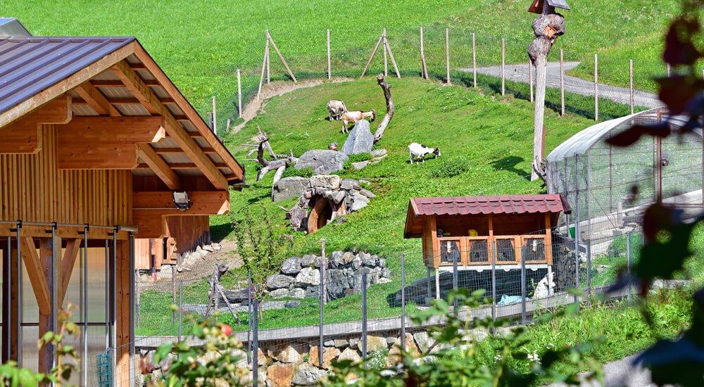 Bauernhof mit Streichelzoo in Südtirol