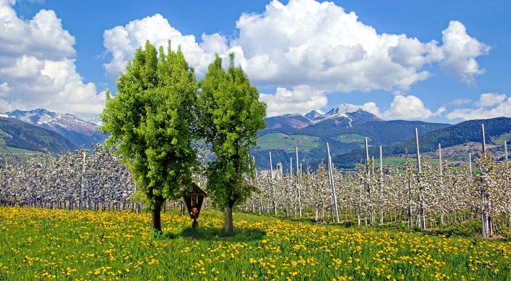 Ein Frühlingsurlaub in Südtirol mit Blütenzauber