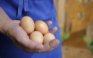 Hofeigene Produkte - Eier