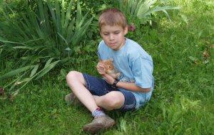 Streichelzoo - Kaninchen streicheln