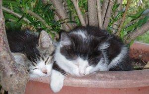 Streichelzoo - Katzen