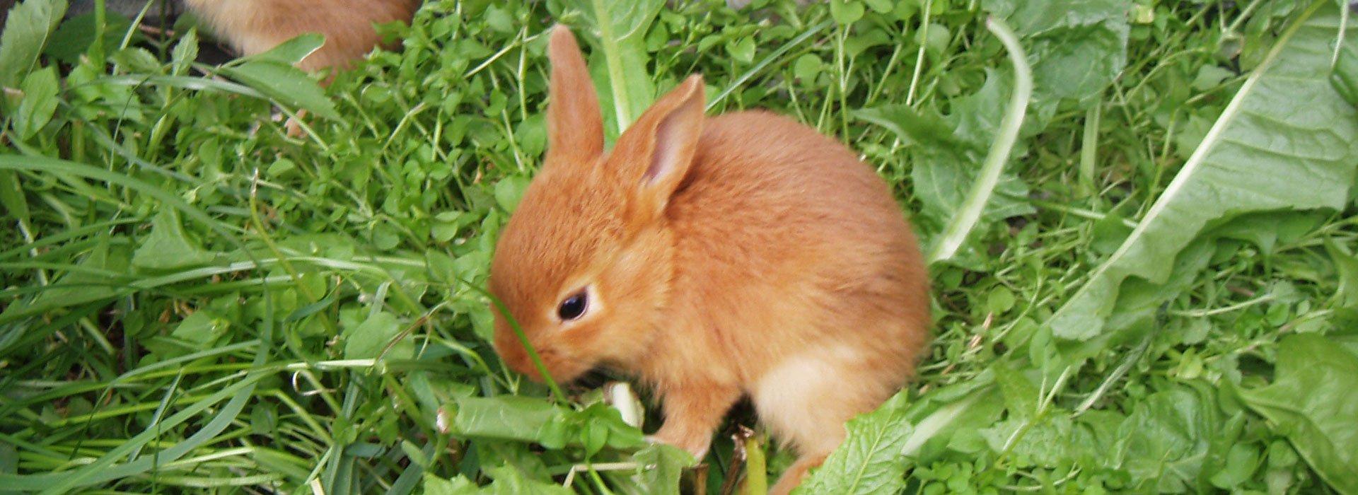 ferienbauernhof-kaninchen